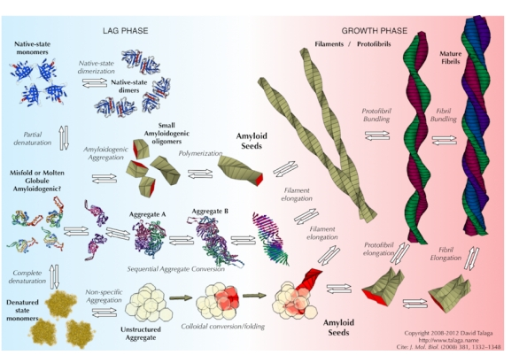 Protein-Folding and Aggregation